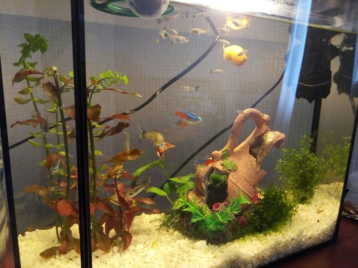 Хочу просто поделиться Аквариумные рыбки, Аквариум, Хобби, Длиннопост