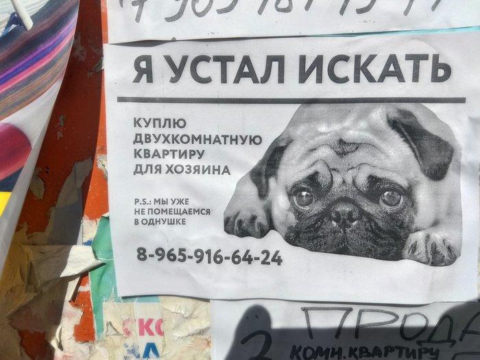 Просто объявление Объявление, Собака, Креатив