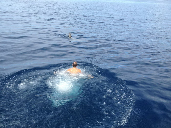 Только бы дельфин..только бы дельфин..