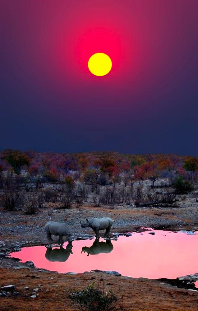 Носороги в Намибии Носорог, Дикие животные, Африка, Намибия, Природа, Водопой, Солнце, Дикая природа