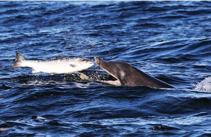 Откуда киты и дельфины берут воду для питья? Морские обитатели, Пресная вода, Наука, Пить, Длиннопост, Млекопитающие