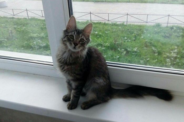 Как в нашем доме появился замечательный малыш Кот, Милота, Добро, Длиннопост