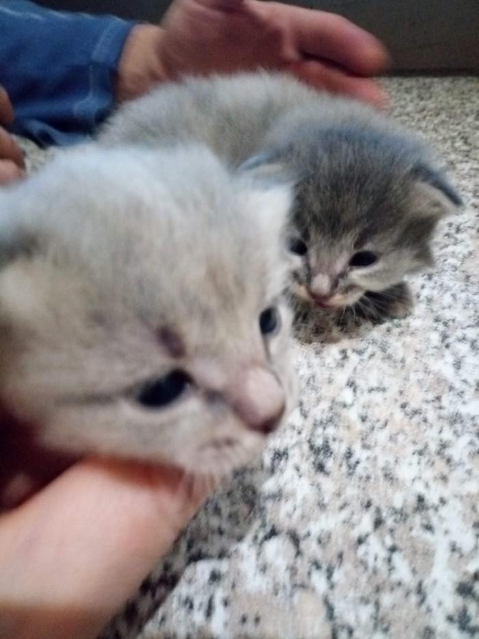 Ещё одна спасенная душа Кошкиспас, Коты и собаки вместе, Птицы, Гифка, Длиннопост, Кот, Собака