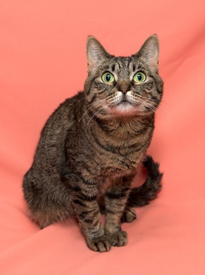 Домашнюю кошку решили усыпить хозяева!!! Кошка Муся, Москва, Помощь животным, Ищу дом, В добрые руки, Кот, Длиннопост, Без рейтинга