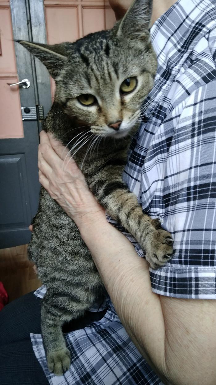Без кота и жизнь не та :-) Без рейтинга, Безысходность, Кот, Ищу дом, Кострома, В добрые руки, Длиннопост