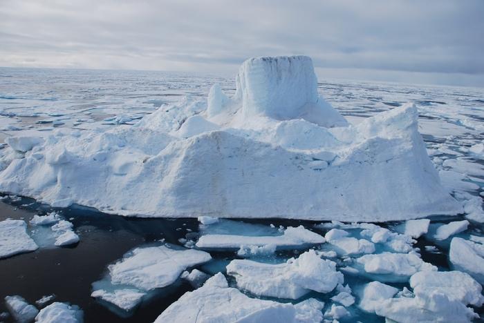 Найди белого медведя на белом снегу. Медведь, Белый медведь, Снег, Лед, Айсберг, Фотография