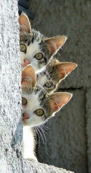 За вами ведётся наблюдение. Тройное. Но очень милое.