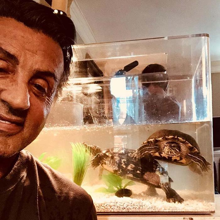Сильвестр Сталлоне и две черепахи из «Рокки» встретились спустя почти 45 лет. Рокки, Сильвестр Сталлоне, Черепаха, Друзья, Встреча, Видео, Длиннопост