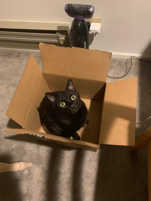 Кот в коробке. Кот - не может быть не в коробке. Эти два объекта во вселенной притягиваются. Просто смирись с этим фактом.