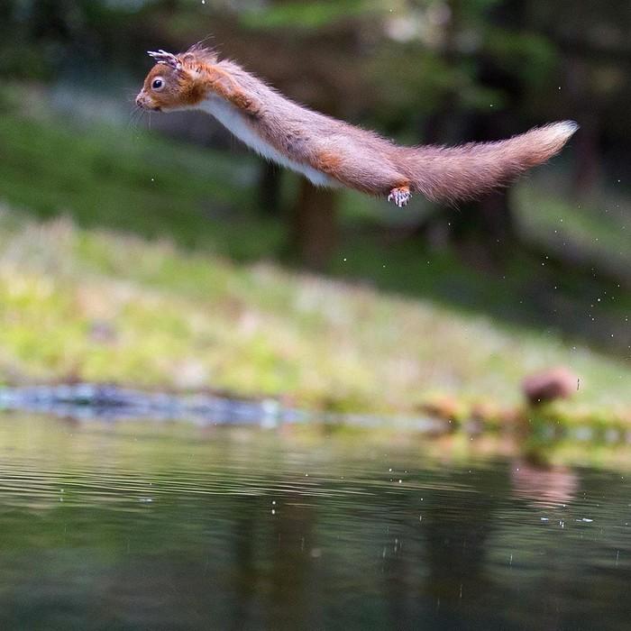 Летю! Фотография, Животные, Белка, Прыжок, Милота