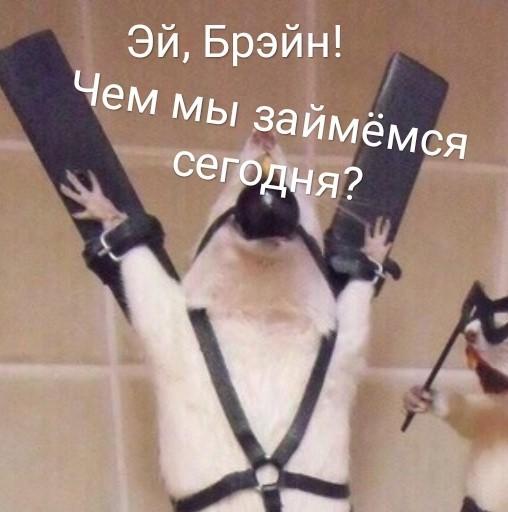 Крыски играют в игры)) Крыса, Длиннопост, Мышь