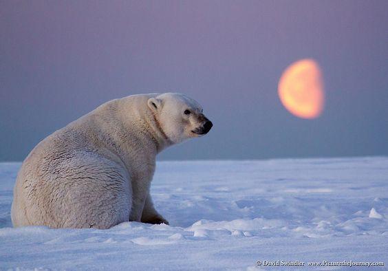 Лунный медведь