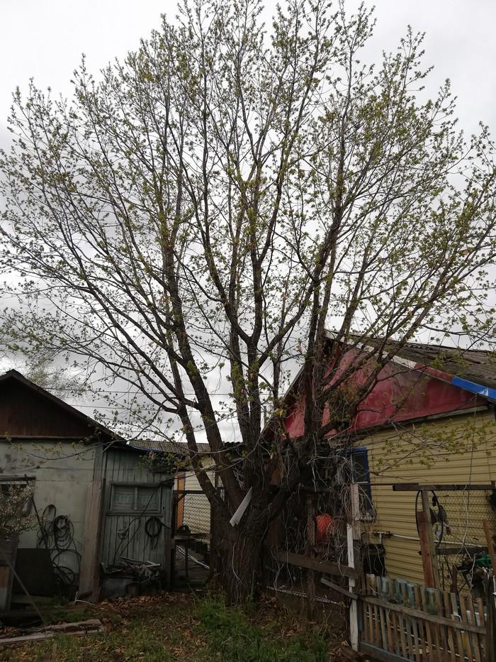 Дуб Дерево, Детство, Длиннопост