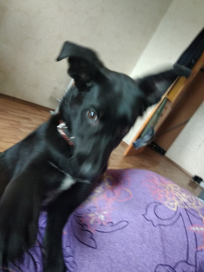 Пропала собака г.Бердск [Найдена] Без рейтинга, Пропала собака, Бердск, Помощь, Длиннопост
