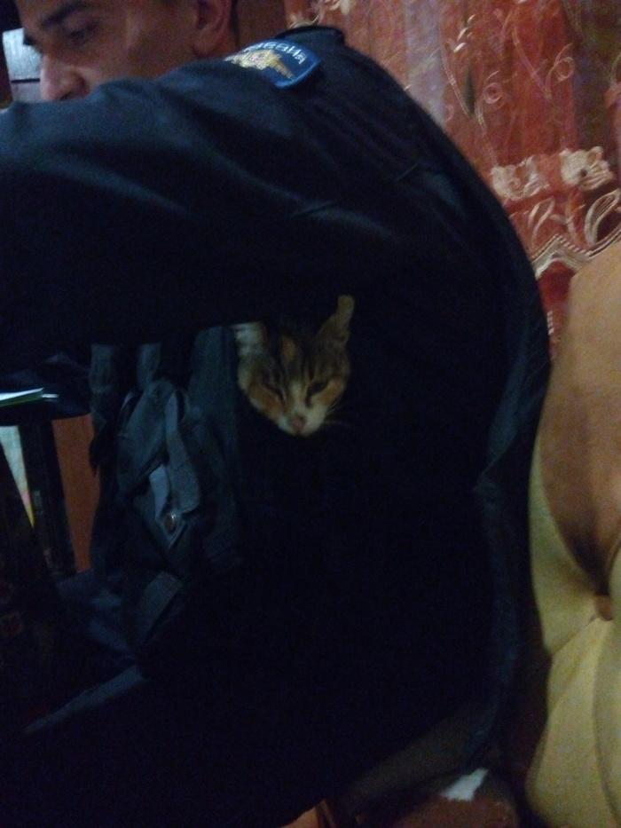 Спецсредство кошка. Крым, Кот, Полиция, МВД