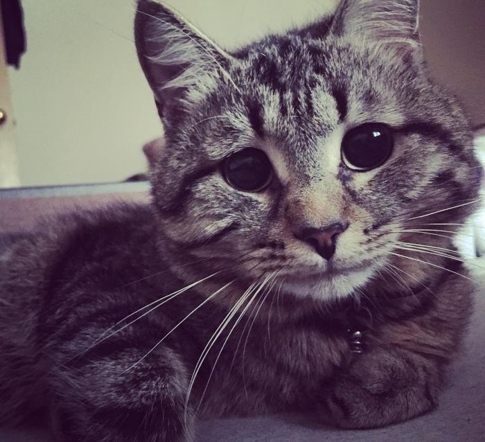 Как я воспитывал котейку+обзор на кошана Кот, Дрессировка, Фотография, Котомафия, Видео, Длиннопост