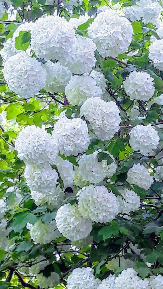 Краснодар весь в цвету! Краснодар, Весна, Красота природы, Длиннопост, Фотография