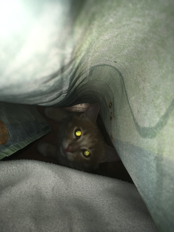 Паштет 5 Кот, Фотография