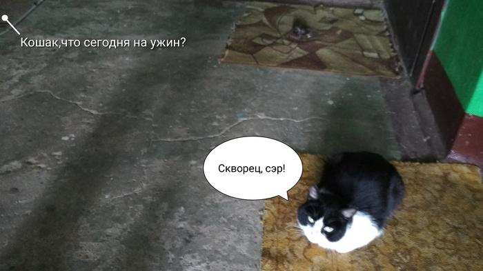 Местный кухмистер Питомец, Забота, Кот, Еда