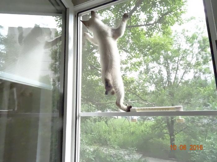 Исследователь. Кот, Кокос, Любопытство, Длиннопост
