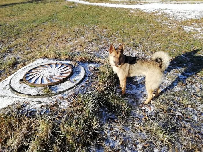 Друзья,помогите найти собаку Пропала собака, Потеряшка, Длиннопост, Собака, Помощь, Москва, Лосиноостровский район, Без рейтинга