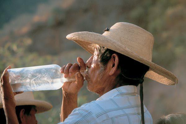 История текилы. Мексика, Текила, Алкоголь, Вокруг света, Длиннопост