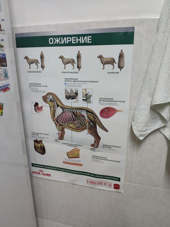 Вот такое плакат около холодильника  повесили ветеринары у нас на работе . На что они намекают ?)
