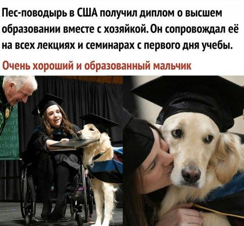 Дипломированный пёс