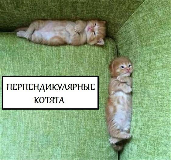 Как образуется котятковый угол