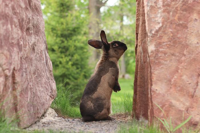 Длиннокроль Кролик, Фотография, Милота, Прогулка, Домашние животные, Длиннопост