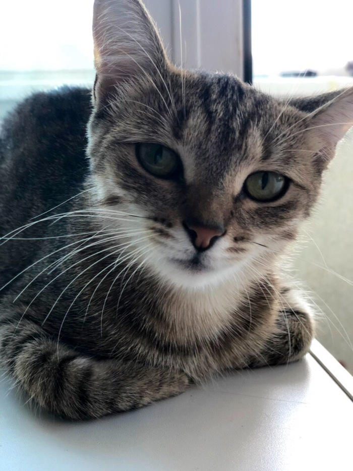 Домашние питомцы Трехцветная кошка, Питомец, Кот, Домашние животные