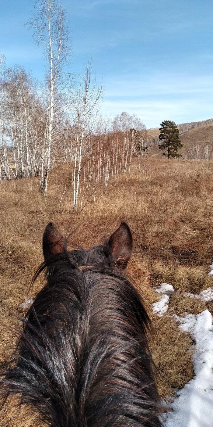 Мир между ушами коня Прогулка, Лес, Поле, Лошади, Веселье, Длиннопост