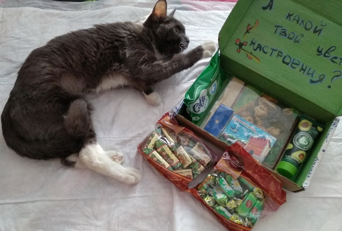 Сегодня цвет - зеленый! Отчет по обмену подарками, Тайный Санта, Обмен подарками, Кот, Длиннопост