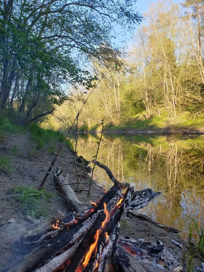 Поездочка в лес Лес, Река, Природа, Рыбалка, Длиннопост