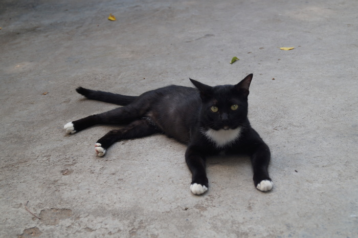 С Пхукета кот Кот, Котомафия, Таиланд