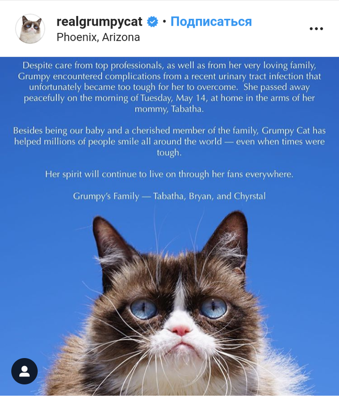 Умерла легендарная сердитая кошка Grumpy Cat Grumpycat, Instagram, RIP