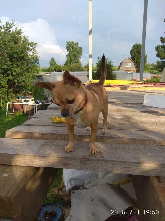 Пропала собака, г.Томск Пропала собака, Томск, Без рейтинга, Потеряшка, Негатив, Длиннопост, Собака