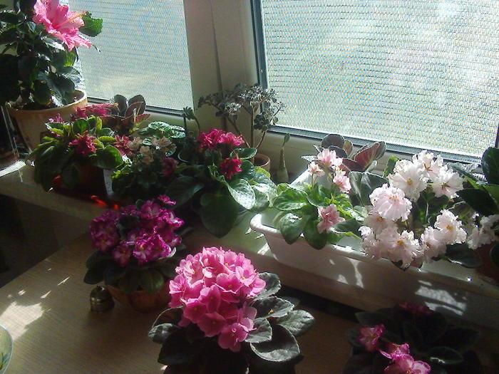 Как бороться с летней жарой, если окна квартиры выходят на солнечную сторону. ( Эффективный бюджетный способ.) Окно, Сетки, Лайфхак, Баян