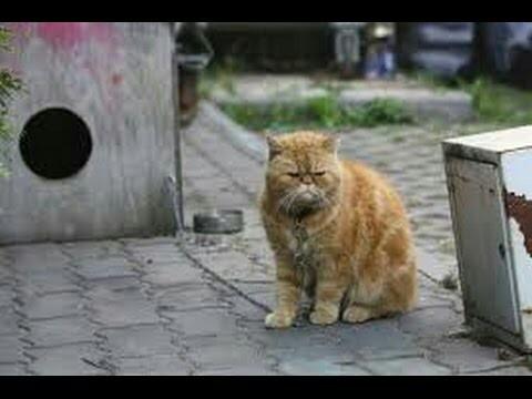 И днем и ночью кот учёный... Кот, Село
