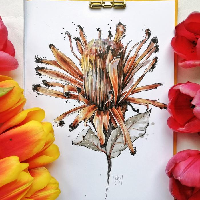 Протея Протея, Цветы, Рисунок, Спиртовые маркеры, Линер, Скетч, Скетчбук, Маркер