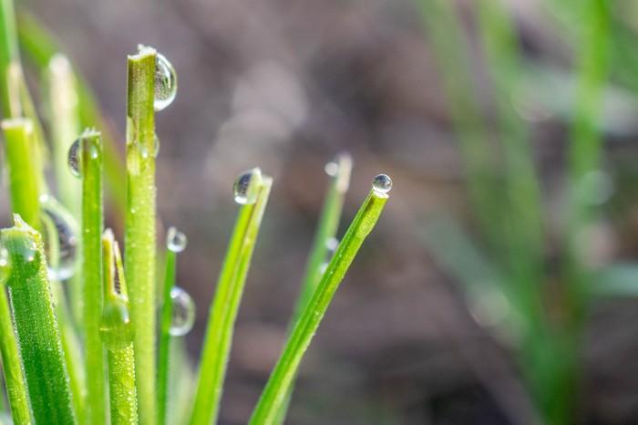Роса, трава, утро. Фотография, Роса, Утро