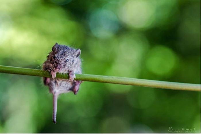Мышиная жизнь. Мышь, Фотография, Boredpanda, Длиннопост