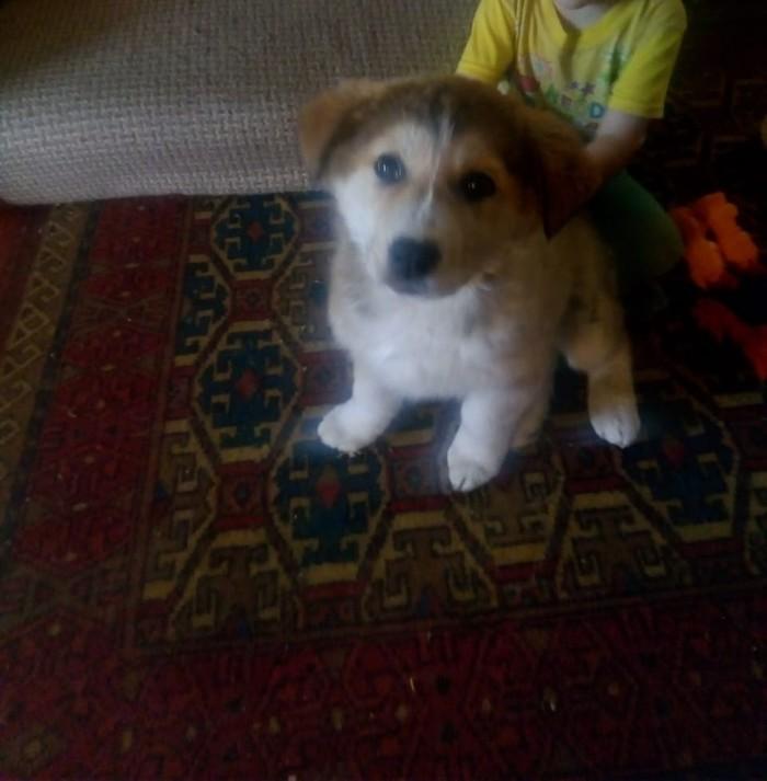 Мой новый щеночек:3Порода: алабай, зовут: Амина