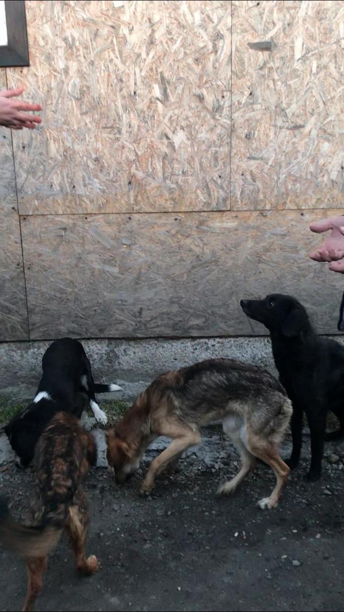 Нужна помощь Новосибирск ищем дом собакам (истощенные узники) Собака, Помощь, Передержка, Добрые люди, Истощение, Без рейтинга, Длиннопост
