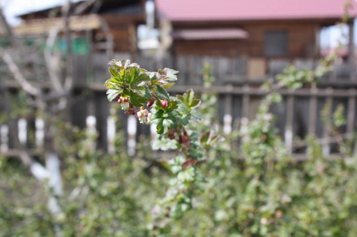 Весна в саду Сибирь, Вот вам фоточка, Красота природы, Весна, Сад, Длиннопост