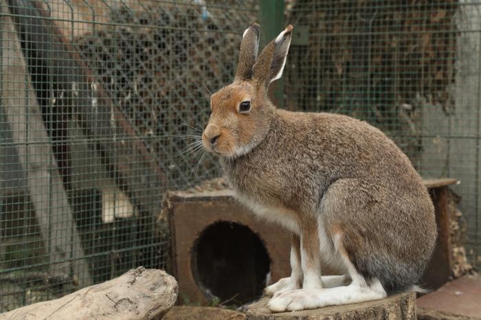 Лапищи Заяц, Лапы, Фотография, Дом зайца