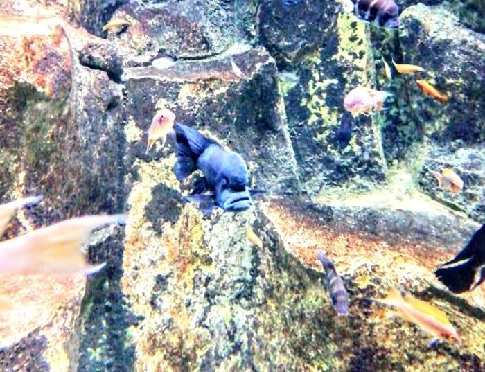 Рыбина, которая знает толк Рыба, Работа, Аквариум, Недовольство