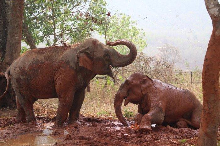 Дом престарелых для слонов-лесорубов в Мьянме Слоны, Дом престарелых, Длиннопост