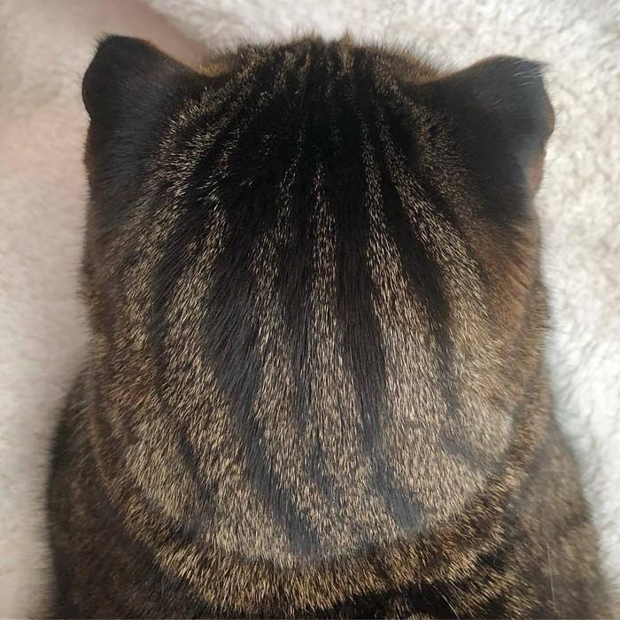 Когда твой кот - немного арбуз