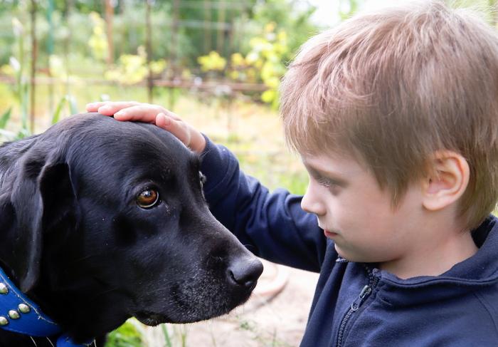 Почему человеку нужна собака? Все дело в генах Наука, Животные, Домашние животные, Ученые, Собаки и люди, Собака, Длиннопост